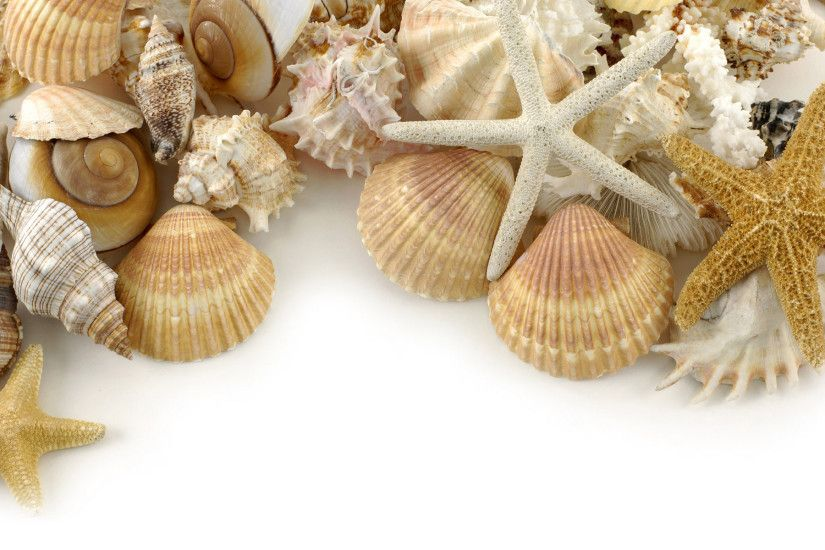 shells wallpaper