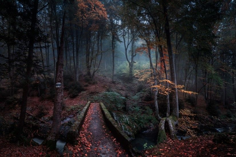 nature, Landscape, Forest, Path, Fall, Leaves, Bulgaria, Trees, Mist,  Creeks, Morning Wallpapers HD / Desktop and Mobile Backgrounds