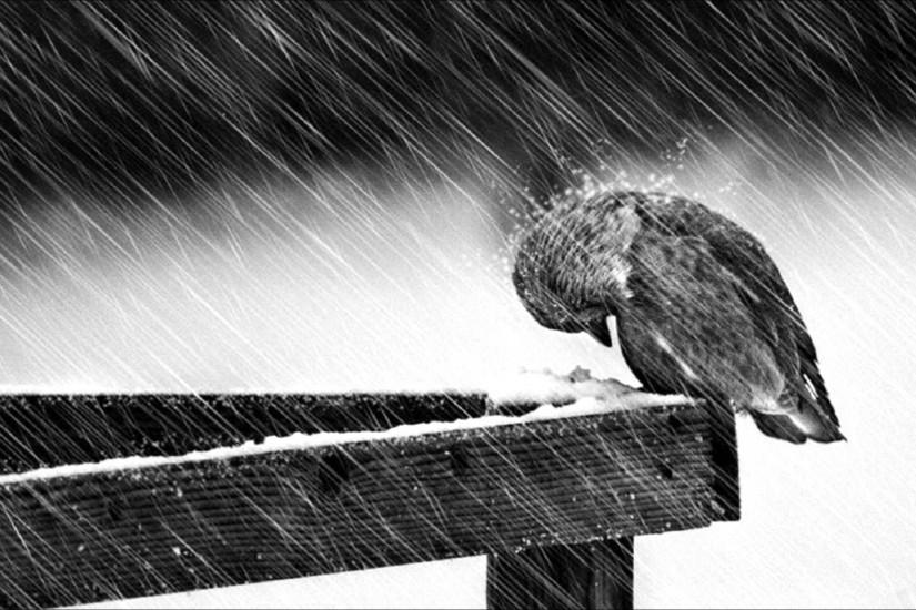 Rain Sad Wallpapers Widescreen with High Resolution Wallpaper