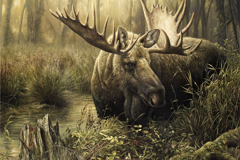 Elk in the spring creek wallpapers and images - wallpapers .