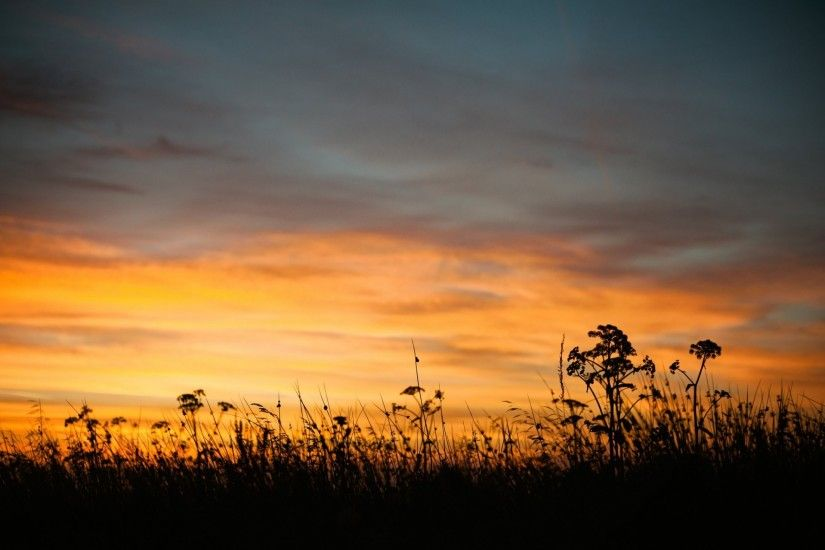 nature summer night twilight sunset sky grass