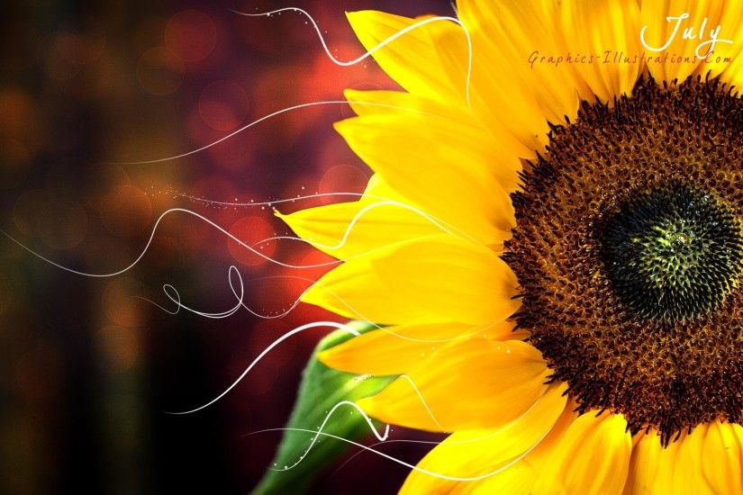 ... Sunflower Desktop Wallpaper