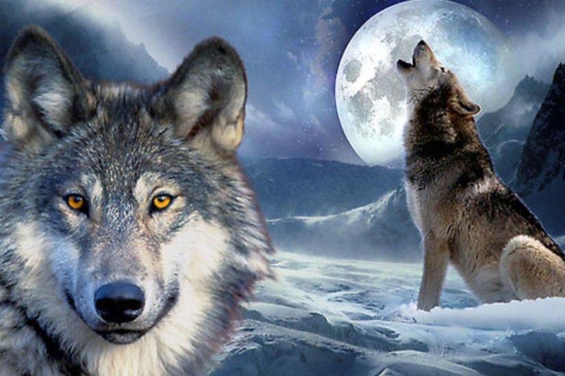 Wolf · Wolf Howling At The Moon Wallpapers ...