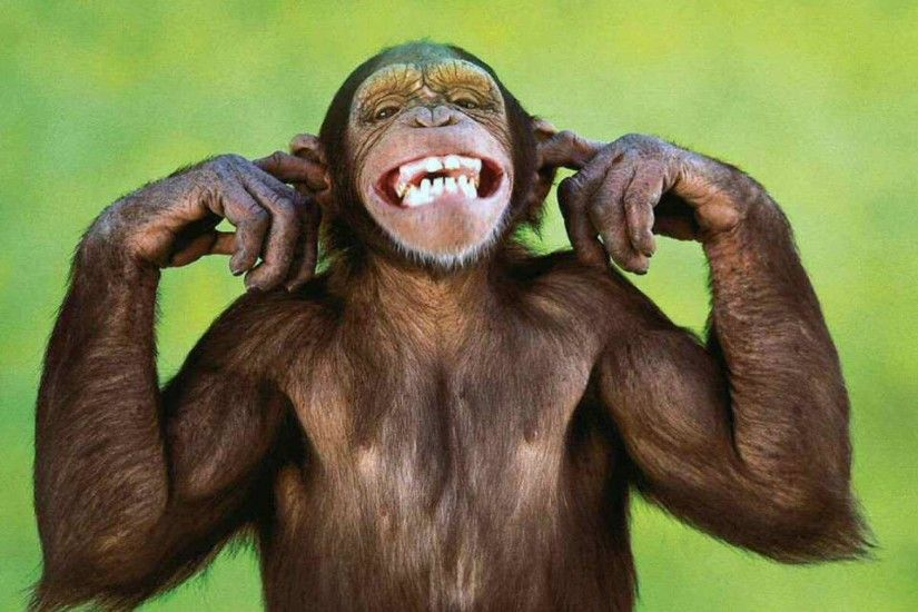 Funny Monkey Wallpaper | Funny Monkey Pictures | Cool Wallpapers