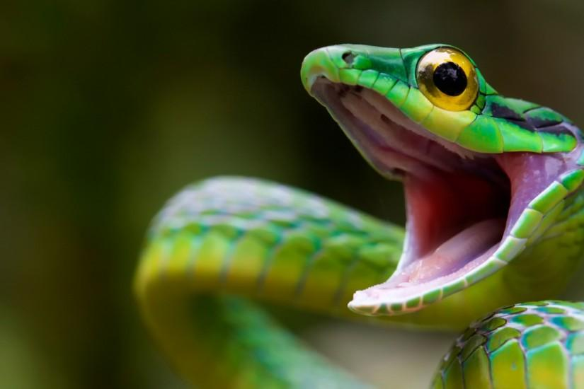 Preview wallpaper snake, green snake, costa rica 1920x1080