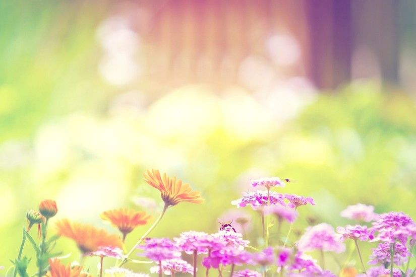 sunshine flowers colorful backgorund 4k ultra hd wallpaper