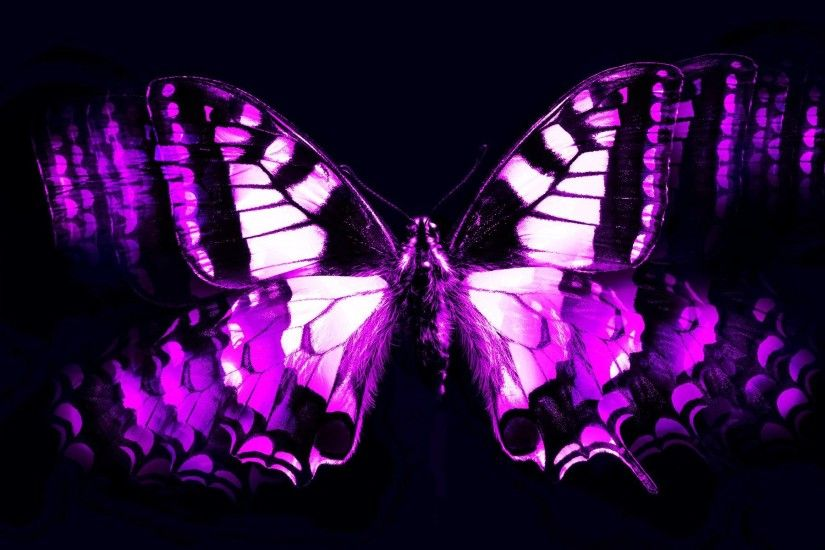 Wallpapers For > Cool Purple Butterfly Wallpapers