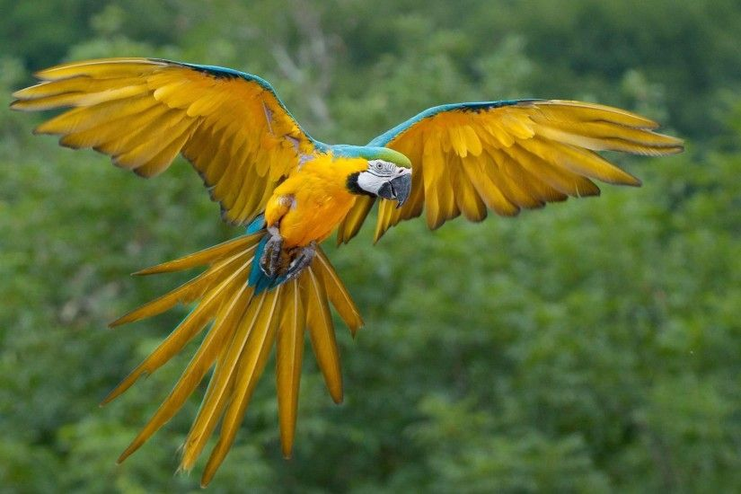 Macaw Parrot Wallpaper High Quality Pc Dekstop Full Hd Wallpapers .