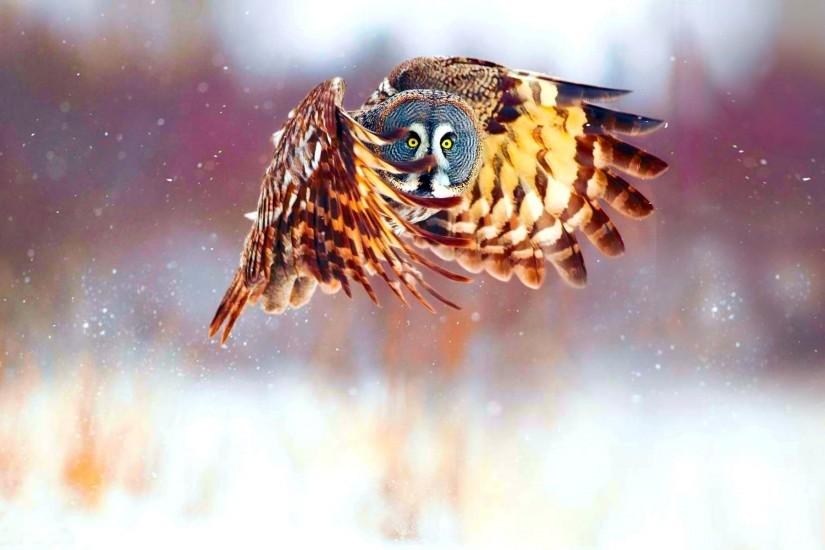 owl wallpaper 1920x1200 free download