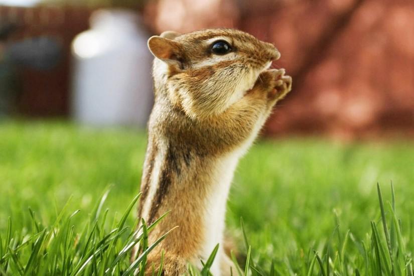 Hd Animal Wallpapers Cute Animals Wallpaper For Desktop Free Download Area