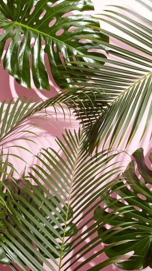 1242x2208 west-elm-tropical-leaves-wallpaper.jpg (1242×2208