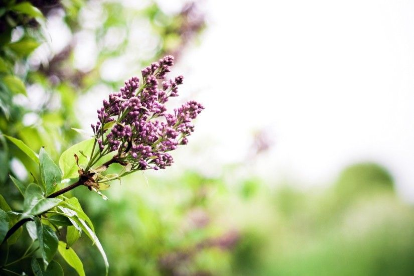 2560x1440 Wallpaper lilac, branch, spring, flowers