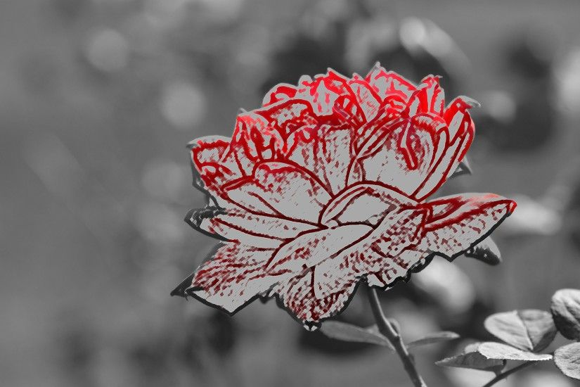 Artsy Red Art Macro Rose Mac Flower Desktop Backgrounds - 3000x2000