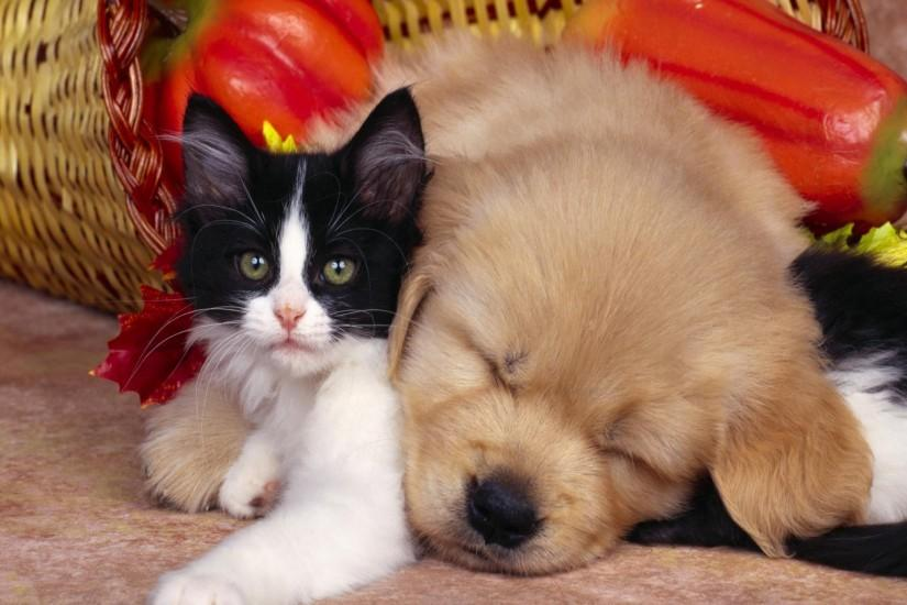 Cute animals wallpaper of black and white cat and dog.