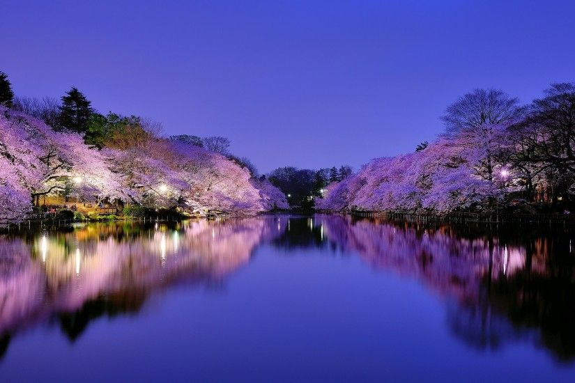 ... anese cherry blossom wallpaper 1920x1080 wallpapersafari ...