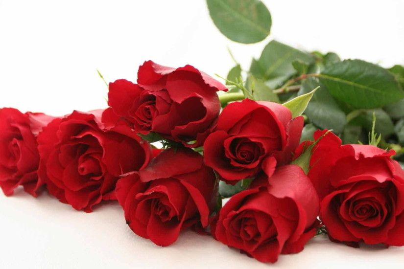 red rose bouquet with white background HD wallpaper