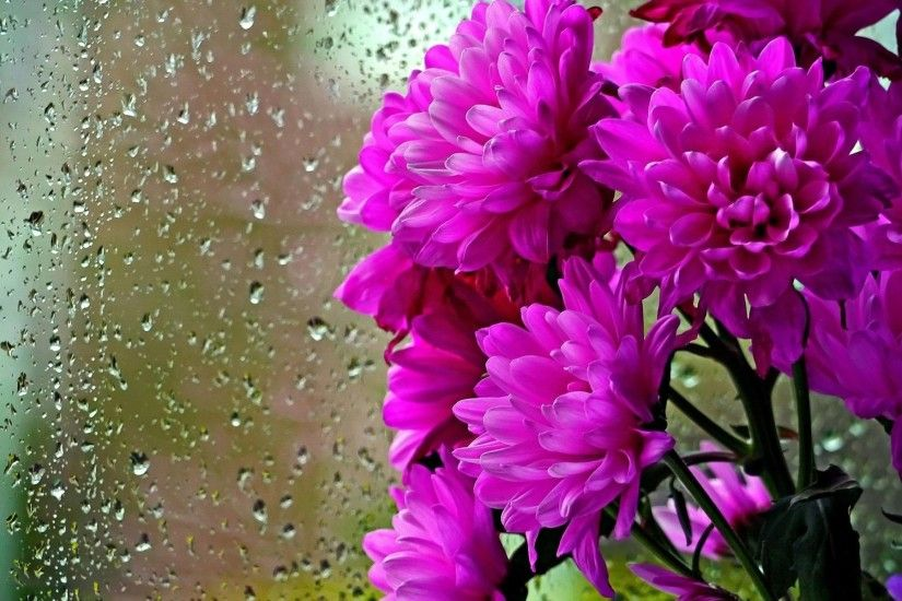 Rainy Day Pink Flowers Wallpaper