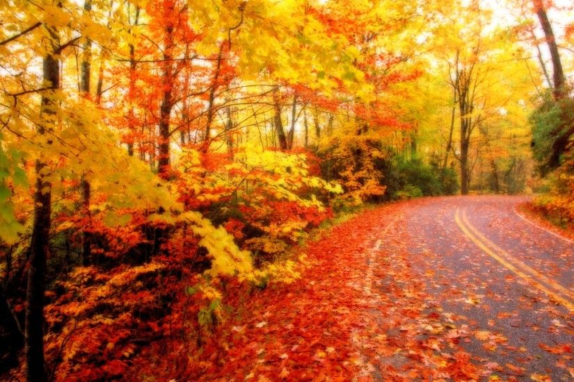 Fall Leaves in Autumn Wallpaper | Wallpaper Download