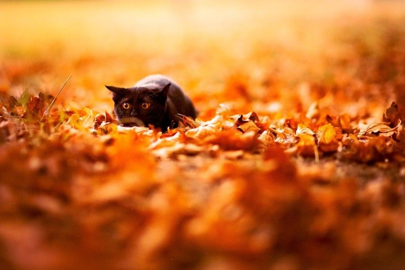 1920x1080 Wallpaper cat, leaves, autumn, nature, background, color, bright