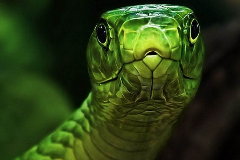 ... Green Snake Wallpaper #6975910 ...