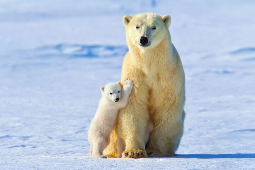 General 1920x1200 polar bears animals snow ice baby animals