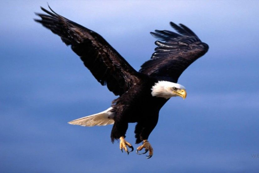 Flying eagle wallpaper free desktop background - free wallpaper image