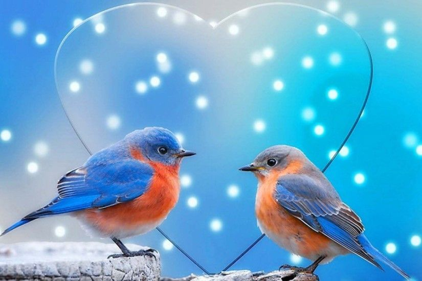 Colorful Sparrow Love Birds | HD Animals and Birds Wallpaper Free Download  ...