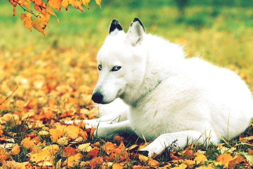 Fall with Animal Background HD Wallpapers