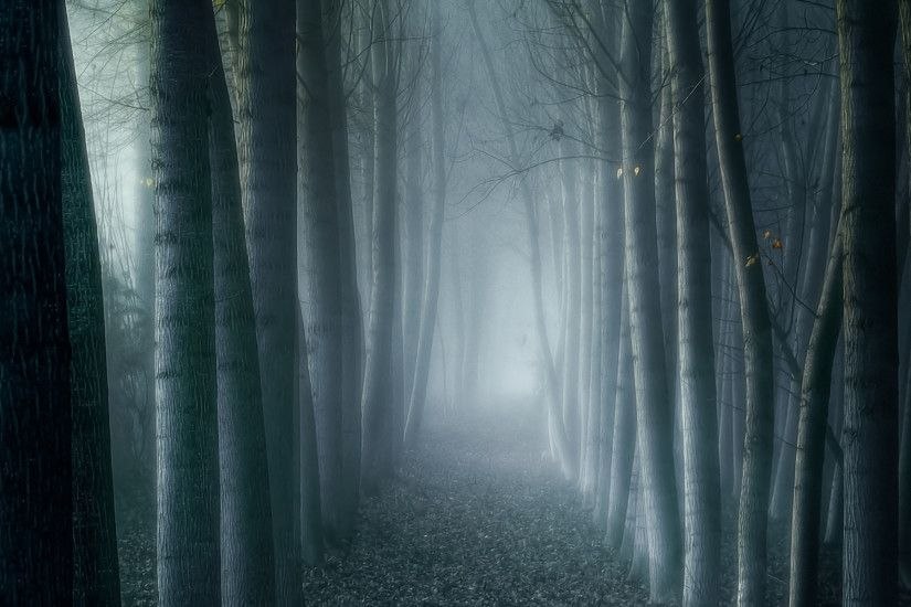 Imagine Wallpaper. Dark Foggy Forest. Available in 1920×1200.