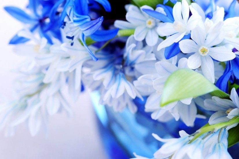 White and Blue Flowers Wallpaper
