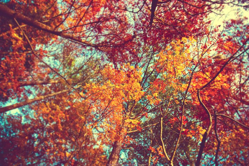 autumn trees tumblr wallpaper