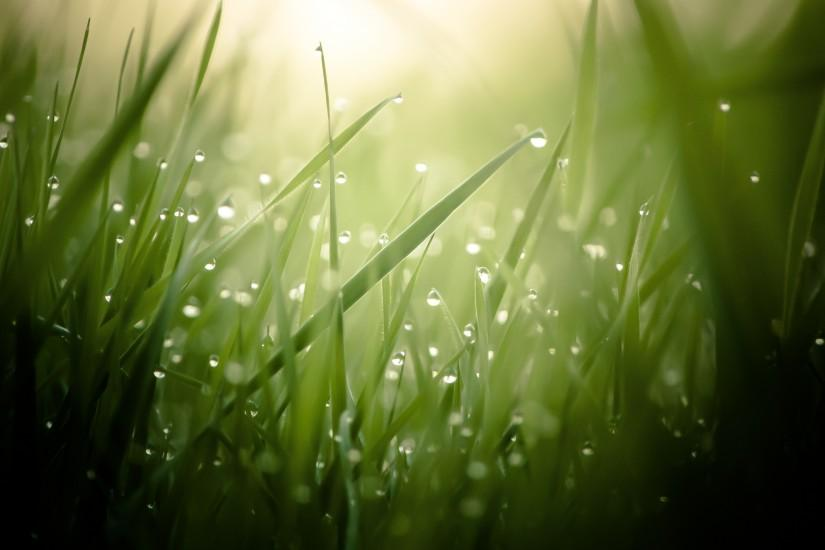 Morning Dew On Grass Threads 4K Ultra HD