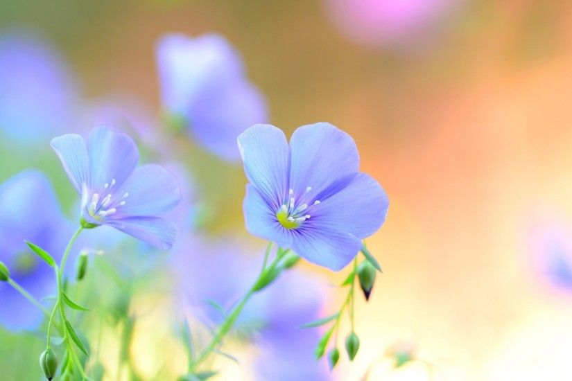 Light blue Flowers Wallpaper