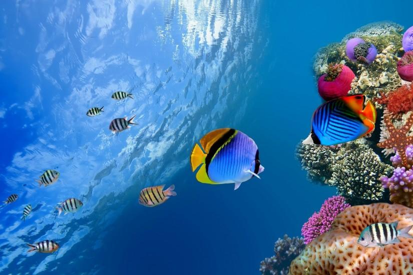 Corals And Fishes HD Wallpaper | Nature Wallpapers