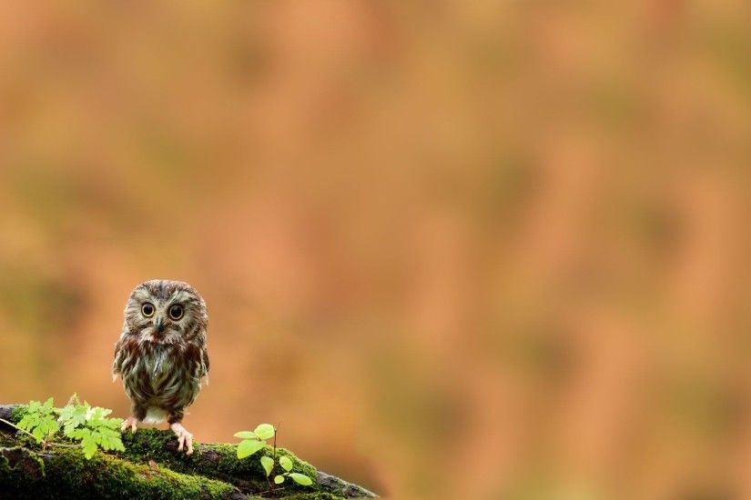 cute owl desktop wallpaper 2562