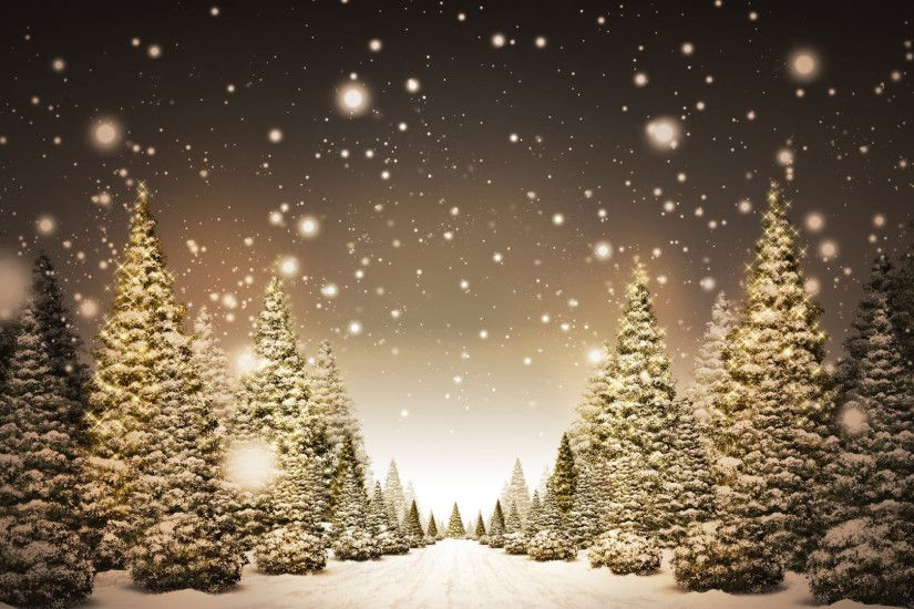 Christmas Trees in Snow HD Wallpaper. « »