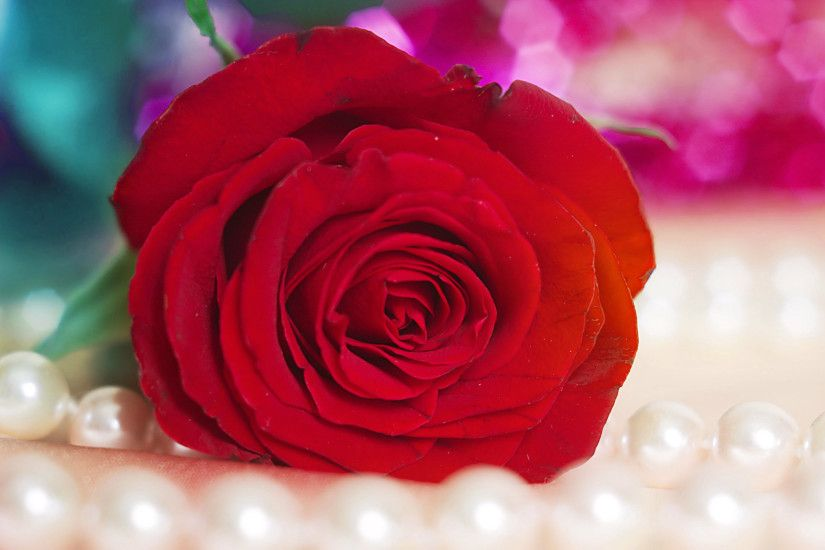 Full HD Beautiful Red Rose HD Wallpaper