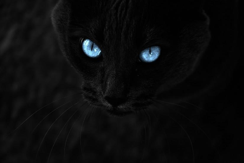 Black Cat With Blue Eyes Wallpaper 871579 ...