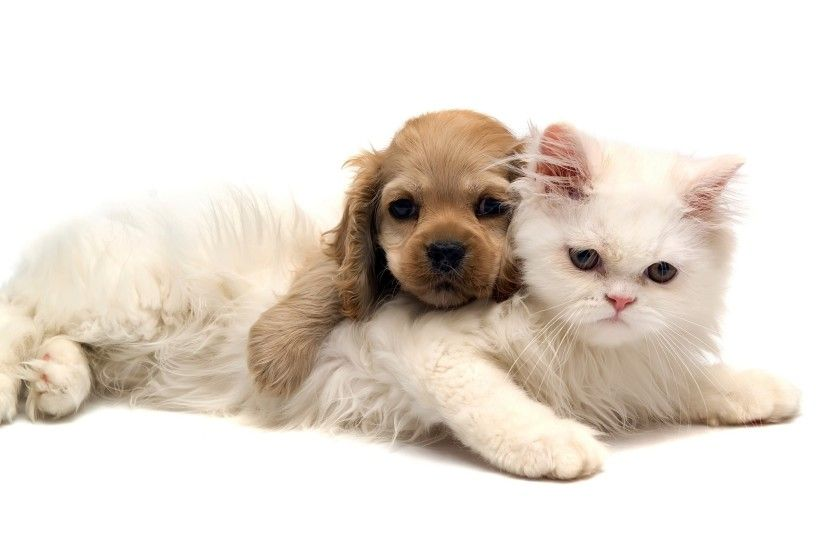Baby cats and dogs pics wallpaper