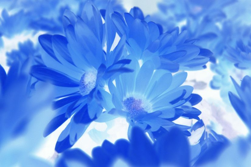 Hd Blue Flowers Wallpaper 7 Wide Wallpaper