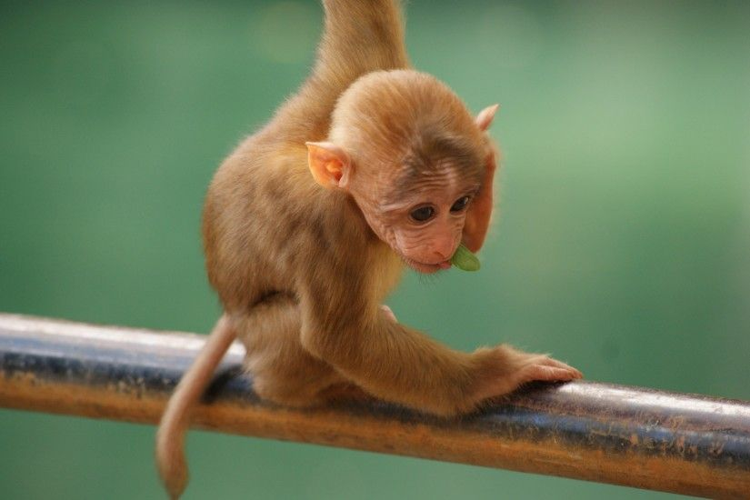 Baby Monkey, Standing, Funny