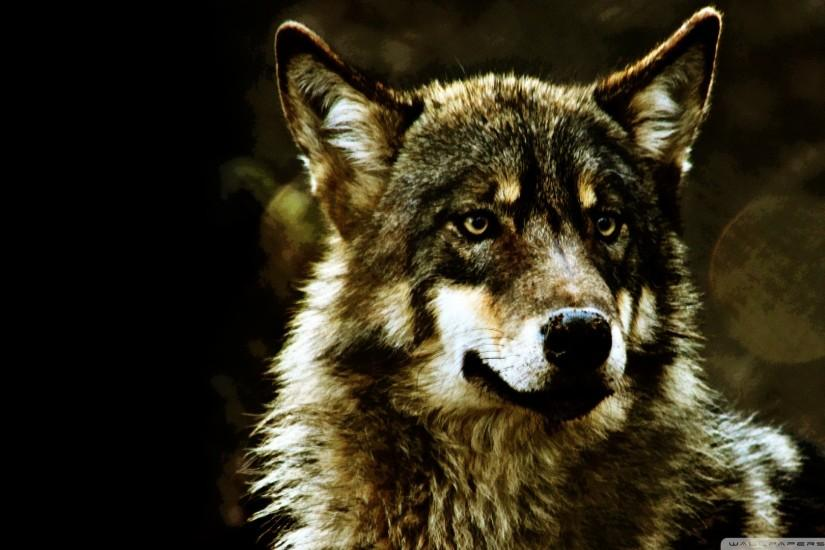Wolf Wallpapers Hd - Desktop Backgrounds