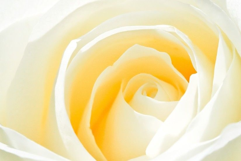 White Roses Backgrounds - Wallpaper Cave ...