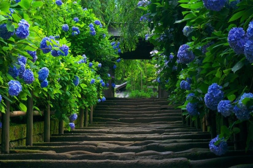 Blue Flower Wallpapers - Wallpaper Cave