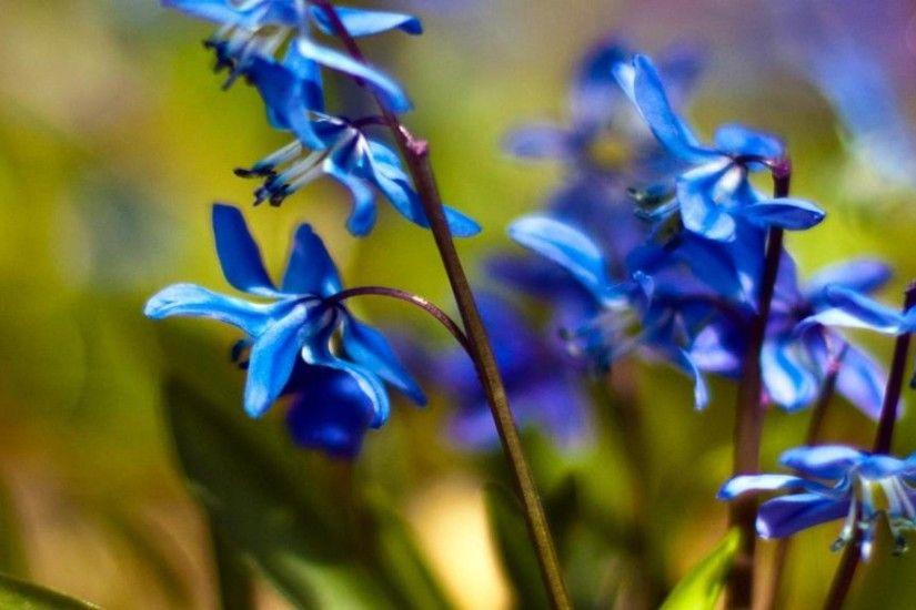 Spring Flower Desktop Background