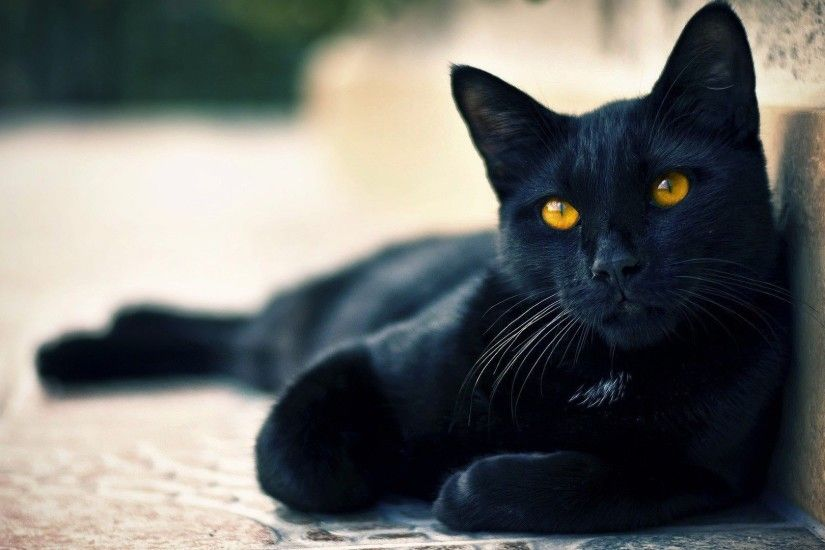 PC 1920x1080 px Black Cat Wallpaper, LyhyXX Backgrounds