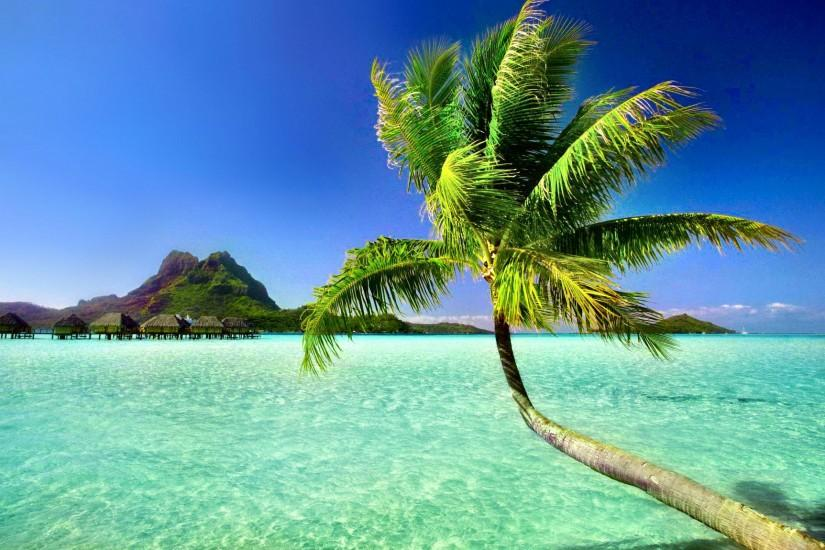 Unique Beach Palm Tree Wallpaper - Wallpaper And Background