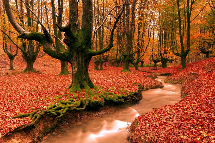 free autumn wallpaper. Â«Â«