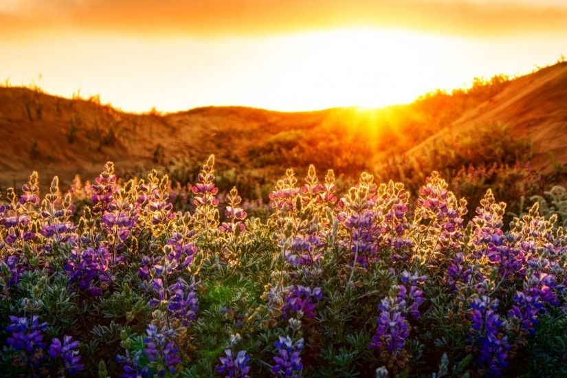 Wildflowers 3 HD desktop wallpaper : Widescreen : High Definition