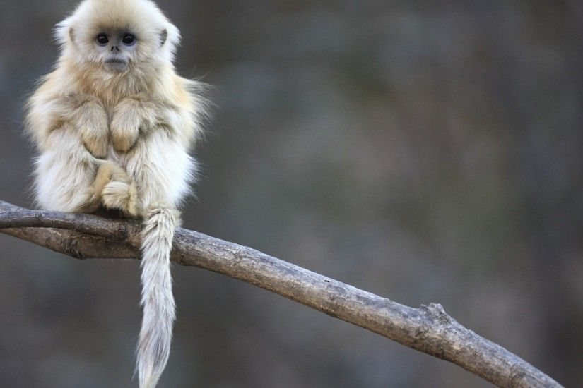 2560x1600 Baby monkey wallpapers and images - wallpapers, pictures, photos